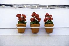 Tres flores rojas vibrantes del geranio en macetas cuelgan en línea de una pared blanca de la casa foto de archivo libre de regalías