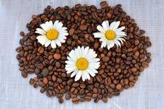 Tres fondos de los granos de la manzanilla y de café Manzanilla y granos de café crudos en la textura blanca, de madera Fotos de archivo libres de regalías