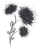 Tres formas de la flor en el fondo blanco Fotografía de archivo libre de regalías