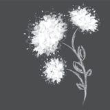 Tres formas de la flor en fondo oscuro Fotografía de archivo