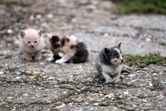 Tres gatitos abandonados Imágenes de archivo libres de regalías