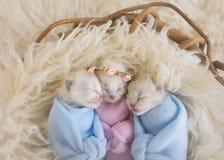 Tres gatitos adorables minúsculos en una cesta fotografía de archivo