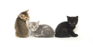 Tres gatitos en blanco Foto de archivo