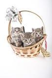 Tres gatitos en cesta Fotos de archivo libres de regalías