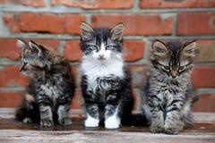 Tres gatitos en el fondo de la pared fotografía de archivo
