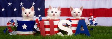 Tres gatitos en los potes patrióticos los E.E.U.U. bloquean la bandera del fondo de la bandera Imagenes de archivo