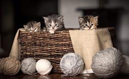 Tres gatitos en una cesta Fotos de archivo
