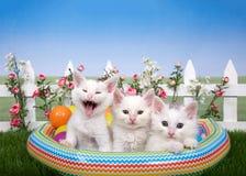 Tres gatitos en una piscina del explotar en el ajuste del patio trasero Imagen de archivo libre de regalías