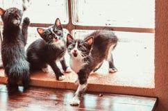 Tres gatitos están jugando cerca de la ventana Imagen de archivo