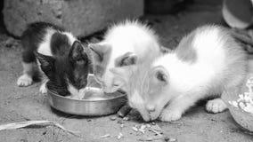 Tres gatitos fotografía de archivo