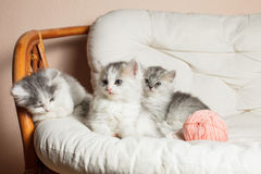 Tres gatitos grises Foto de archivo libre de regalías
