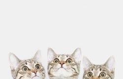 Tres gatitos lindos están esperando para ser alimentados Caras del gato que miran para arriba Fotos de archivo libres de regalías