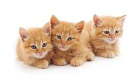 Tres gatitos marrones Imagen de archivo libre de regalías