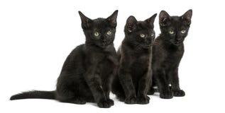 Tres gatitos negros que se sientan, 2 meses, aislados Foto de archivo libre de regalías