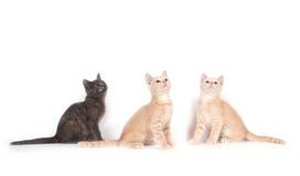 Tres gatitos que miran para arriba Imagen de archivo libre de regalías