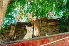 Tres gatitos y un gato en la mirada del tejado abajo fotografía de archivo