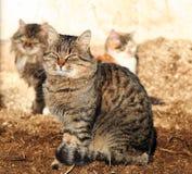Tres gatos Imagenes de archivo