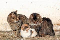 Tres gatos Imágenes de archivo libres de regalías