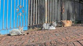 Tres gatos Fotos de archivo libres de regalías
