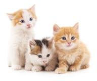 Tres gatos Fotografía de archivo libre de regalías