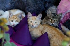 Tres gatos encendido Imágenes de archivo libres de regalías
