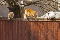 Tres gatos perdidos Foto de archivo