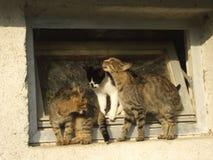 Tres gatos que se limpian en el edificio viejo Foto de archivo