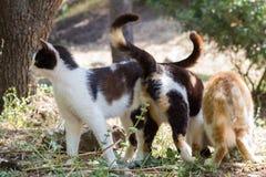 Tres gatos sin hogar Imagen de archivo libre de regalías