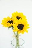 Tres girasoles en el florero claro Imagen de archivo libre de regalías