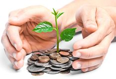 Tres growing on coins. Hands holding tress growing on coins / csr / sustainable development / economic growth Royalty Free Stock Photo