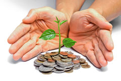 Tres growing on coins Royalty Free Stock Photo