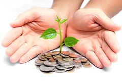 Tres growing on coins. Hands holding tress growing on coins / csr / sustainable development / economic growth stock photo
