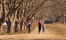 Tres hermanas de las muchachas que corrían saltar abajo de árbol alinearon el camino de tierra Foto de archivo libre de regalías