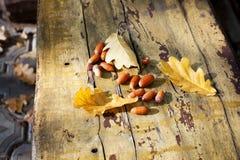 Tres hojas amarillas caidas del roble y bellotas rojas en viejo cierre del fondo del tablero de madera para arriba, follaje de or fotos de archivo