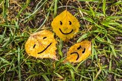 tres hojas amarillas del abedul del otoño Fotos de archivo libres de regalías