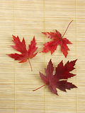 Tres hojas de la caída Imagen de archivo libre de regalías