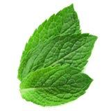 Tres hojas de menta fresca fotografía de archivo