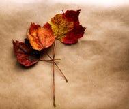 Tres hojas rojas. Fotos de archivo libres de regalías
