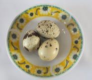 Tres huevos de codornices Imagen de archivo libre de regalías