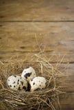 Tres huevos de codornices en la jerarquía Imágenes de archivo libres de regalías