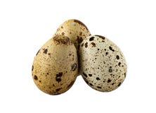 Tres huevos de codornices en un fondo blanco Imagenes de archivo