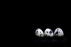 Tres huevos de codornices en un fondo negro Foto de archivo