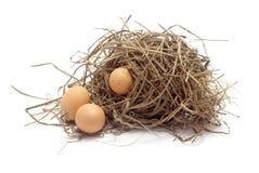 Tres huevos del pollo en el pájaro jerarquizan en el fondo blanco Fotografía de archivo libre de regalías
