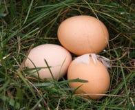 Tres huevos del pollo que mienten en una hierba verde Imágenes de archivo libres de regalías