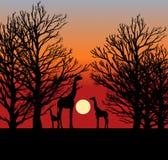 Tres jirafas en la puesta del sol en África ilustración del vector