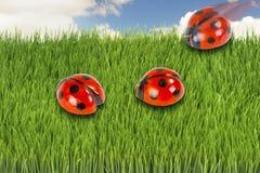 Tres ladybugs Fotos de archivo