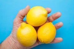 Tres limones grandes en la mano se aíslan en un fondo azul foto de archivo