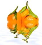 Tres mandarinas con las hojas con la reflexión en el agua imagenes de archivo