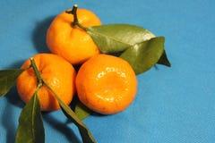 Tres mandarines con las hojas en azul, azul, fondo naranja Fotografía de archivo libre de regalías
