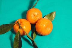 Tres mandarines con las hojas en azul, azul, fondo naranja Fotos de archivo libres de regalías